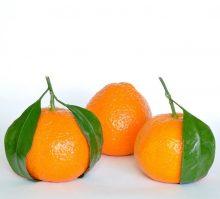Mandarina Roja