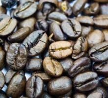 Café Semilla
